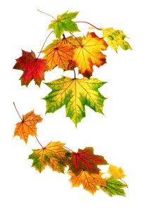 Fotolia-Herbstbild-mehrere-Blaetter