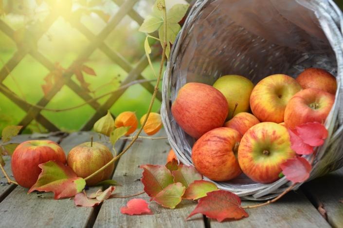 Herbstkur Herbst