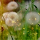 Heuschnupfen-Naturheilkundliche-Allergiebehandlung