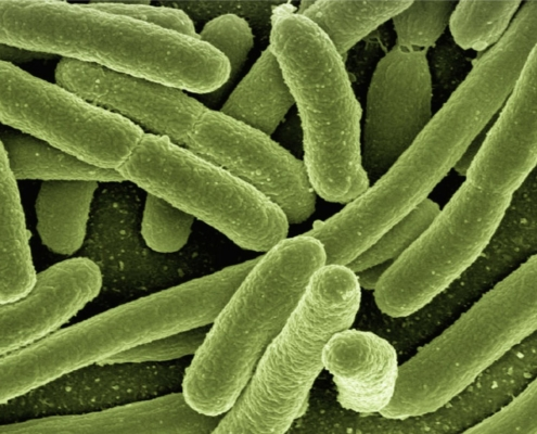 Mikrobiologische-Therapie
